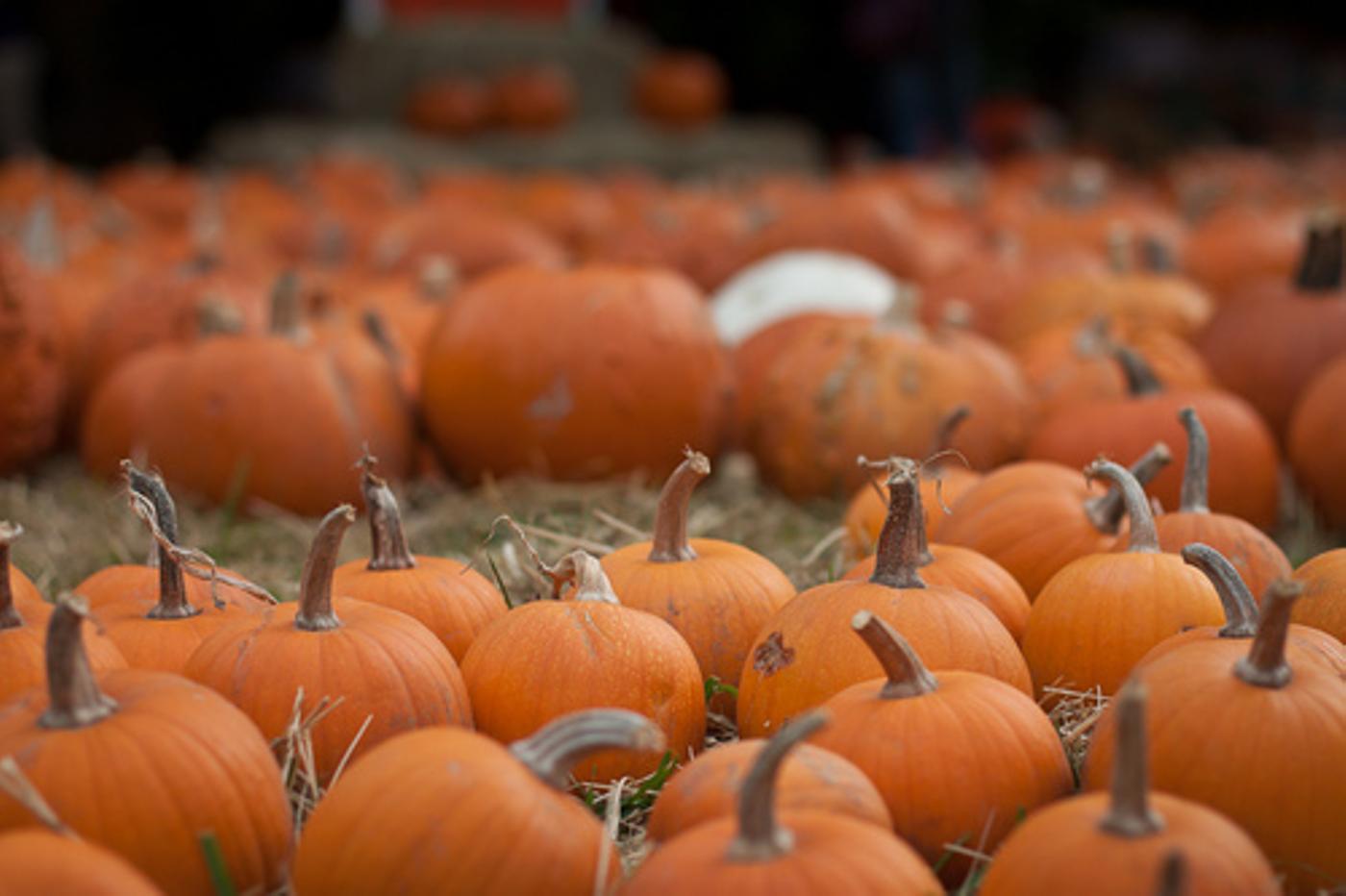 pumpkins-PINP.jpg